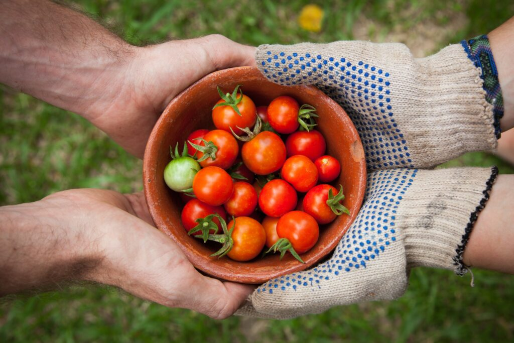 Goede eigenschappen en voedingswaarde van tomaten